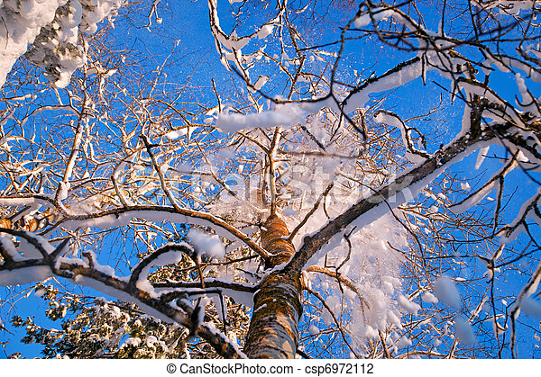 Snow falling from tree - csp6972112
