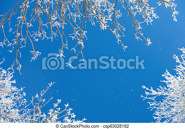 Snow falling from trees - csp63028182