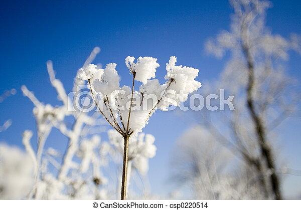 snow flower - csp0220514
