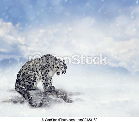 Snow Leopard - csp30483159