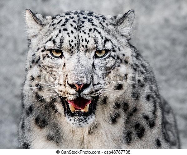 Snow Leopard XXVII - csp48787738