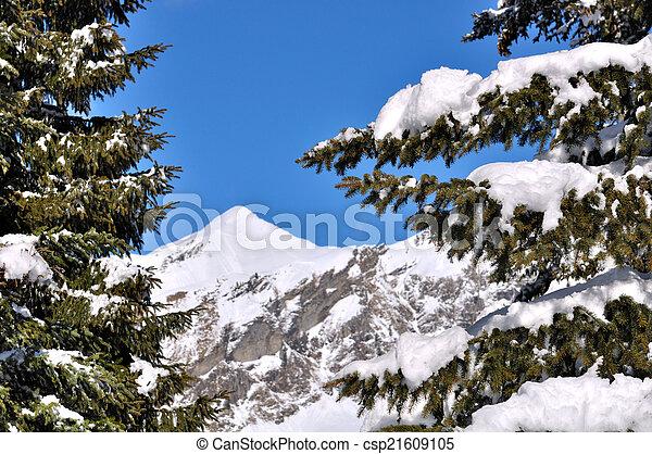 snow on branch of fir - csp21609105