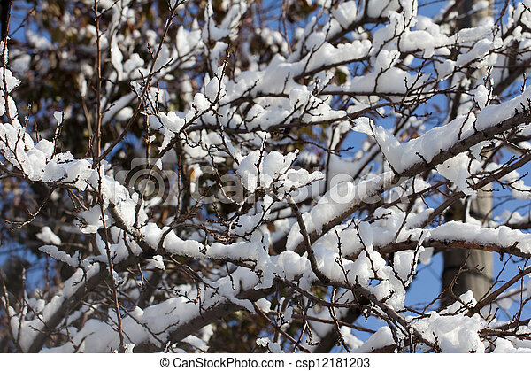Snow on the branches of a tree against a blue sky - csp12181203