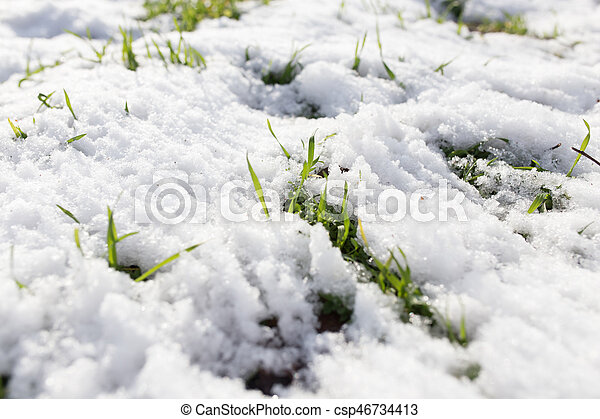 snow on the green grass - csp46734413