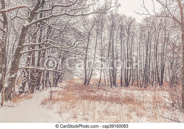 Snow on tree branches in the forest - csp39160083