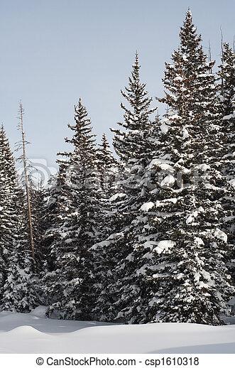 Snow Scene - csp1610318