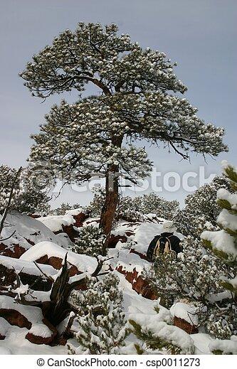 Snow! - csp0011273