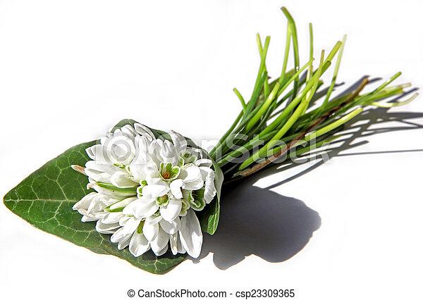 Snowdrop bouquet - csp23309365