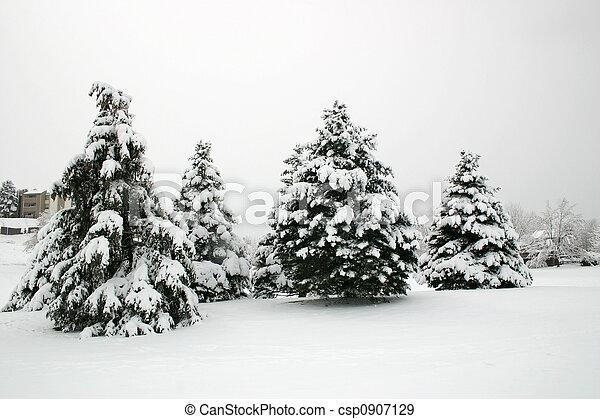 Snowfall Trees - csp0907129
