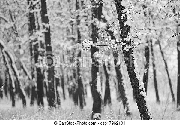 Snowing landscape in the park - csp17962101