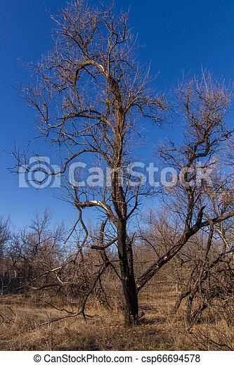 snowless, paisagem inverno, manhã - csp66694578