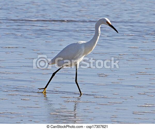 Snowy Egret in the surf - csp17307621