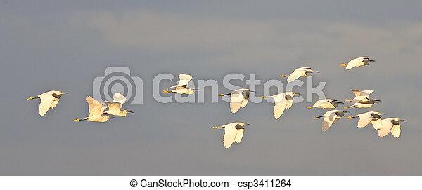 Snowy Egret - csp3411264
