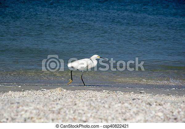 Snowy Egret - csp40822421