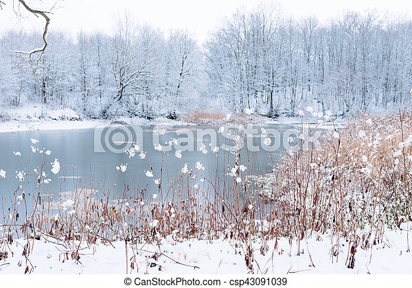 snowy forest near the lake - csp43091039