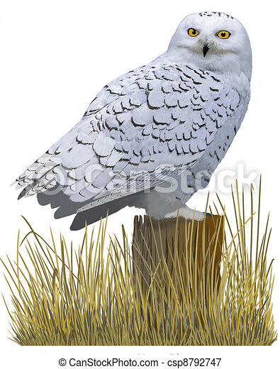 snowy owl illustrations and clipart 221 snowy owl royalty free
