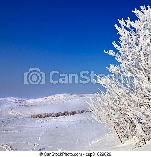 snowy tree on a sunny day - csp31629626