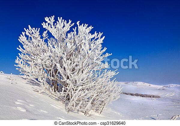 snowy tree on a sunny day - csp31629640