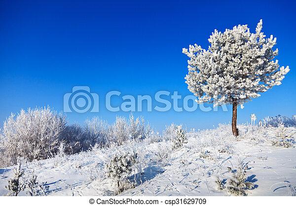 snowy tree on a sunny day - csp31629709