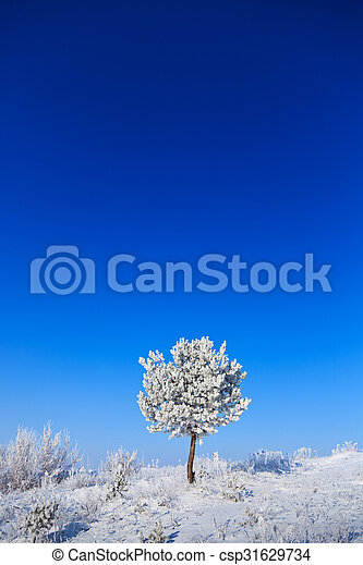 snowy tree on a sunny day - csp31629734