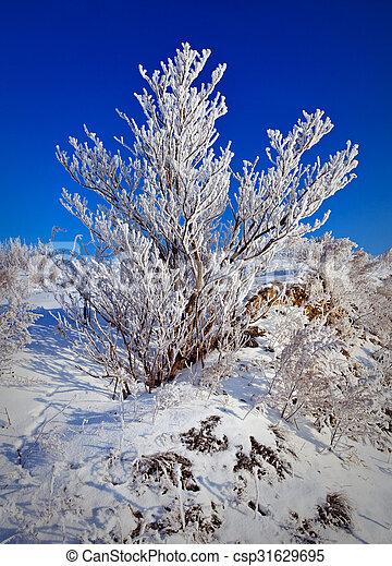 Snowy tree - csp31629695