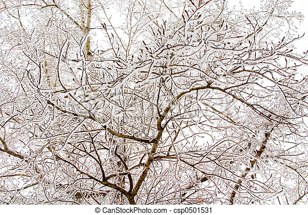 snowy trees - csp0501531