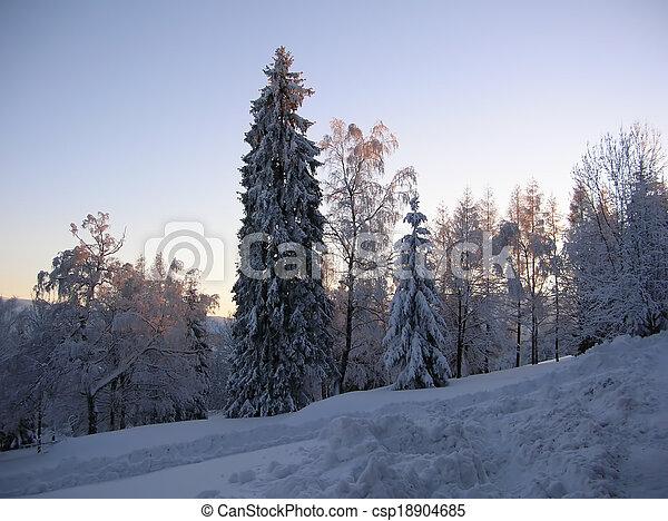 snowy trees - csp18904685