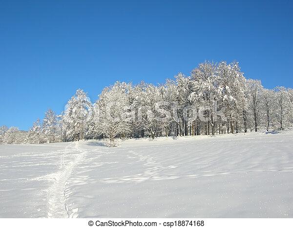 snowy trees - csp18874168