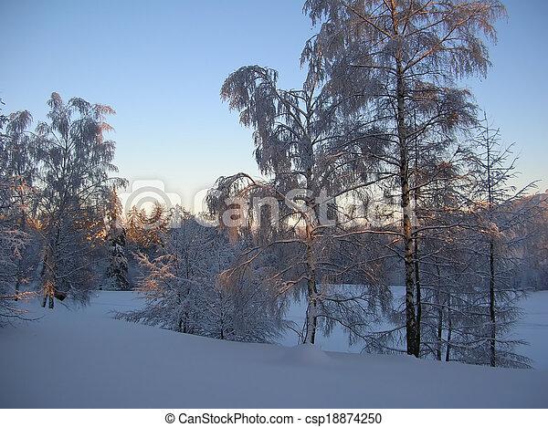 snowy trees - csp18874250