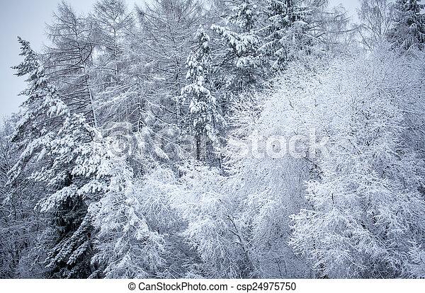 Snowy trees - csp24975750