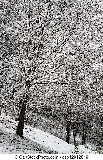 snowy trees - csp12912849