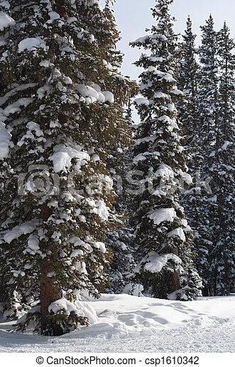 Snowy Trees - csp1610342