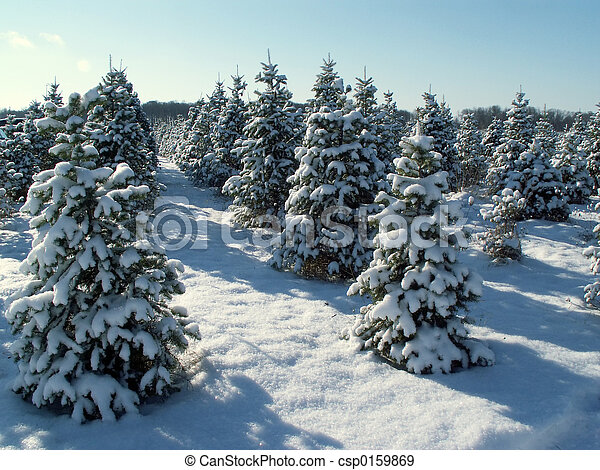 Christmas Tree Snow.Snowy Trees