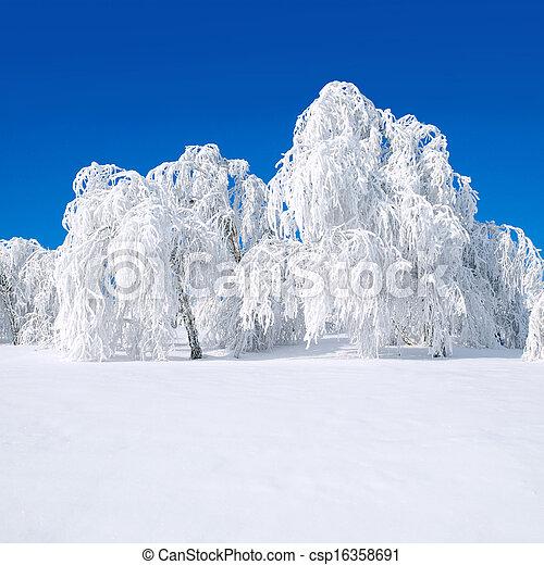 Snowy trees. - csp16358691
