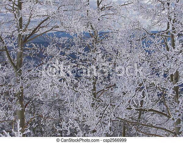 Snowy Trees - csp2566999