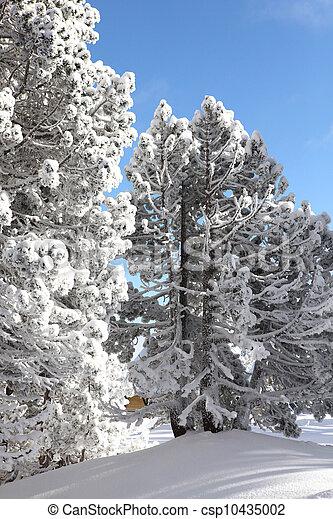 Snowy trees - csp10435002