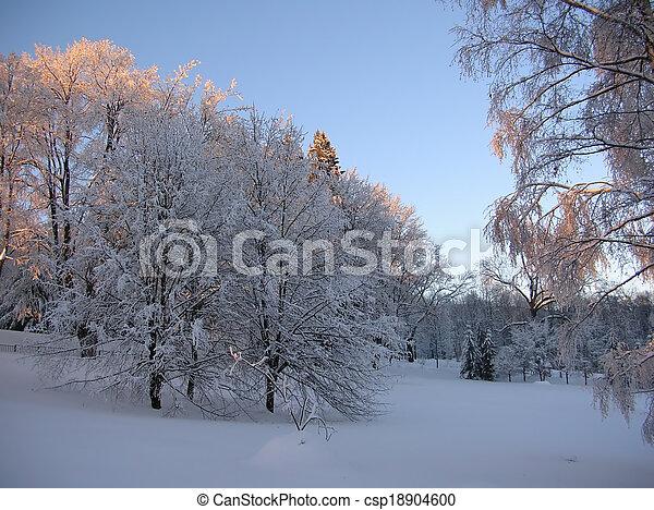 snowy trees - csp18904600