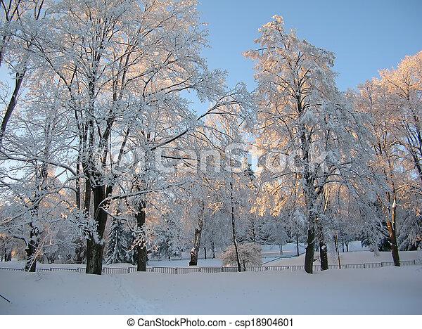 snowy trees - csp18904601