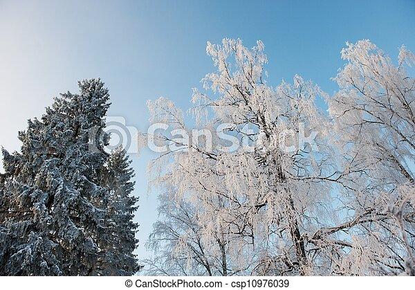 Snowy trees - csp10976039