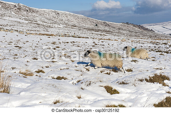 Snowy winter countryside landscape scene - csp30125192
