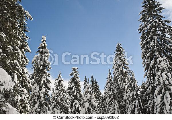 Snowy winter forest - csp5092862