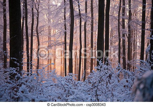 Snowy woods - csp3008343