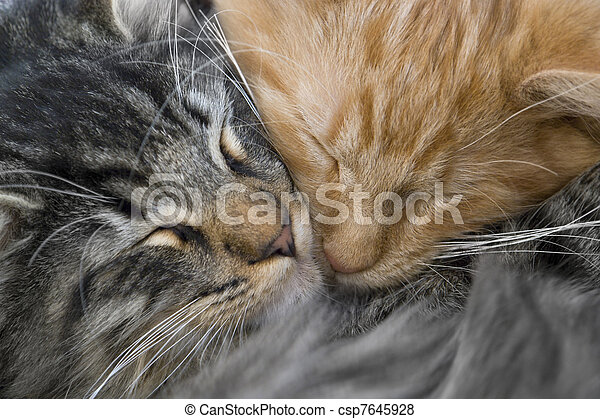 snuggling, katjes - csp7645928