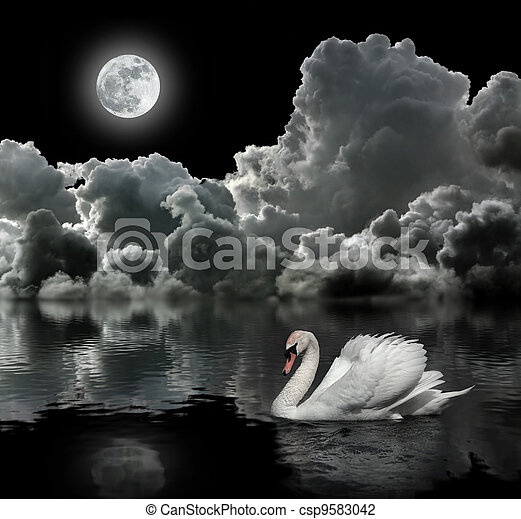 sob, cisne branco, lua, noturna - csp9583042