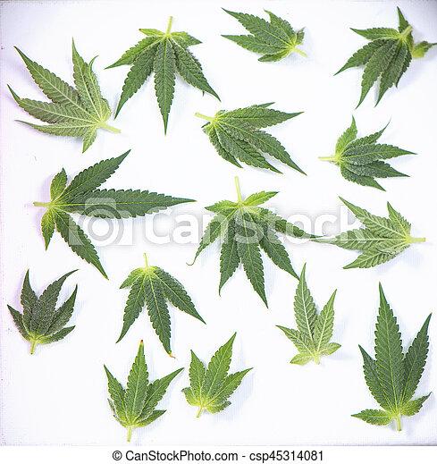 sobre, conceito, médico, -, marijuana, isolado, cannabis, pequeno, branca, folhas - csp45314081