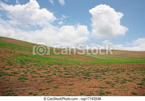 sobre, nuvens, prado - csp17163546