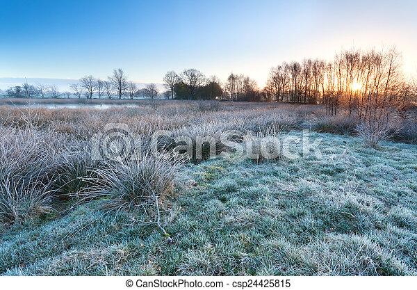 sobre, pântano, gelado, amanhecer, manhã - csp24425815