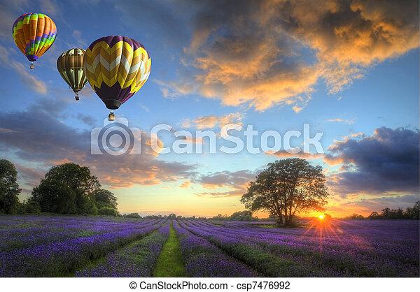 sobre, voando, lavanda, ar, quentes, pôr do sol, balões, paisagem - csp7476992