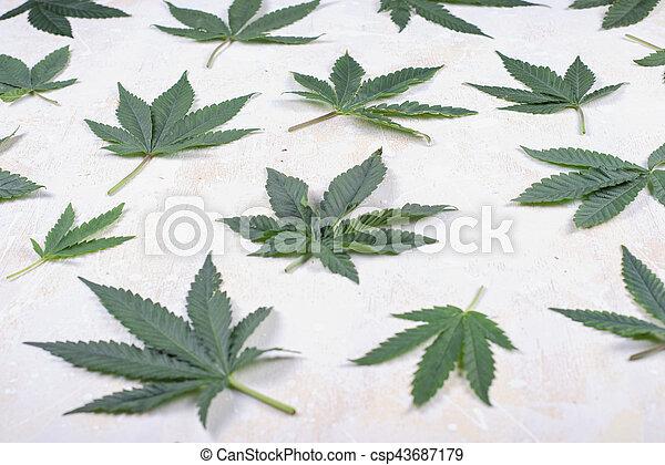sobre, woode, abstratos, cannabis, fundo, branca, folhas - csp43687179