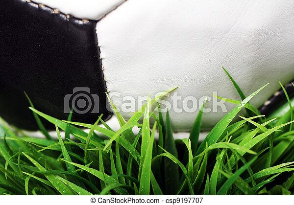 Soccer ball in grass - csp9197707